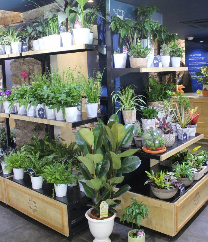 magasin plantes vertes