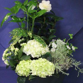 coupes de plantes blanches deuil