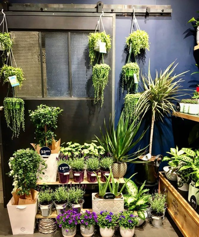 magasin plantes vertes lelasseur